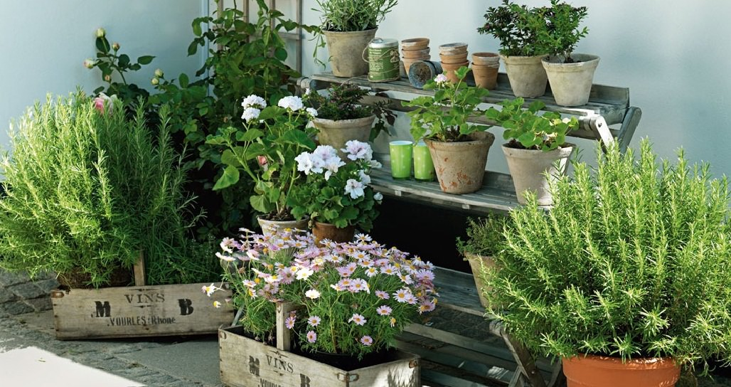 Apartment Herb Garden Tips Apartment Gardening Balcony Garden Web