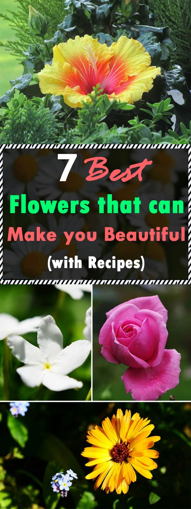 Do you know some of the flowers in your garden can make you more BEAUTIFUL? Here are 7 flowers for skin care with recipes. Check out!