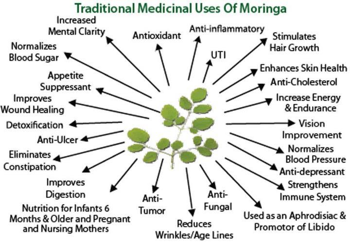 Nutrients in moringa, moringa benefits