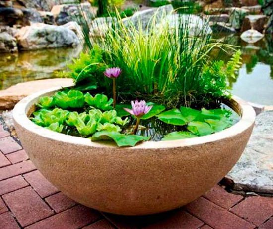 Learn How To Make A Container Water Garden Full Of Water Lilies And Irises Blooming Fountains Bubbling And Fishes Swimming