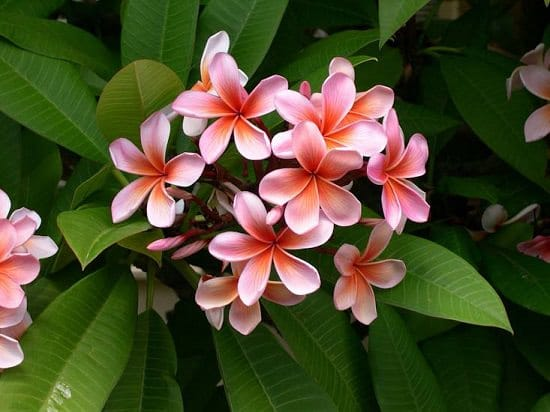 Most Fragrant Flowers According To Gardeners Balcony Garden Web