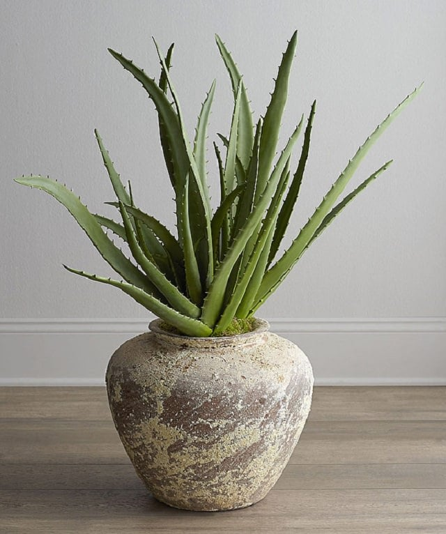 how-to-care-for-an-aloe-plant-2