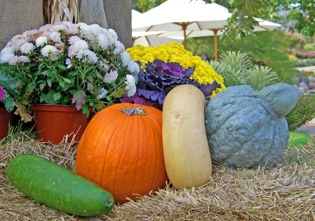 Easy To Grow Veggies Grow Gourds Balcony Garden Web
