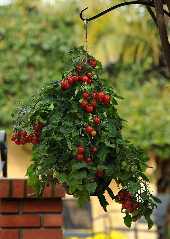 Small Balcony Garden Vegetables
