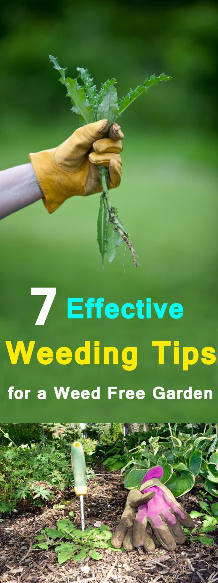 "Making long patches weed free is cumbersome but applying these weeding tips can surely mollify your headache or ""weed-ache""."