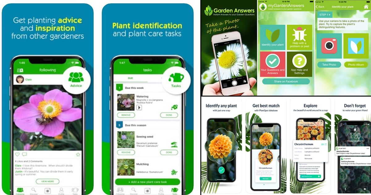 Best Plant Identification Apps 2020 | Balcony Garden Web