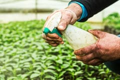 close-up-hands-man-spraying-small-plants-i-greenhouse-51514102