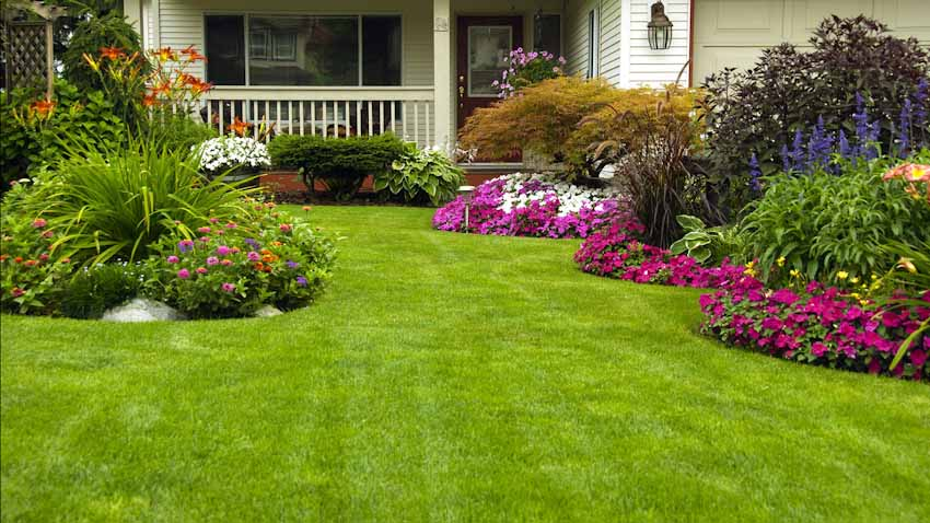 how to care lawn