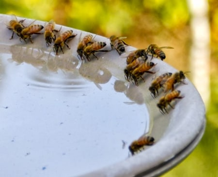 provide-a-water-source to bees