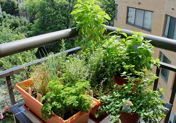 How to Make a Balcony Herb Garden | Complete Tutorial