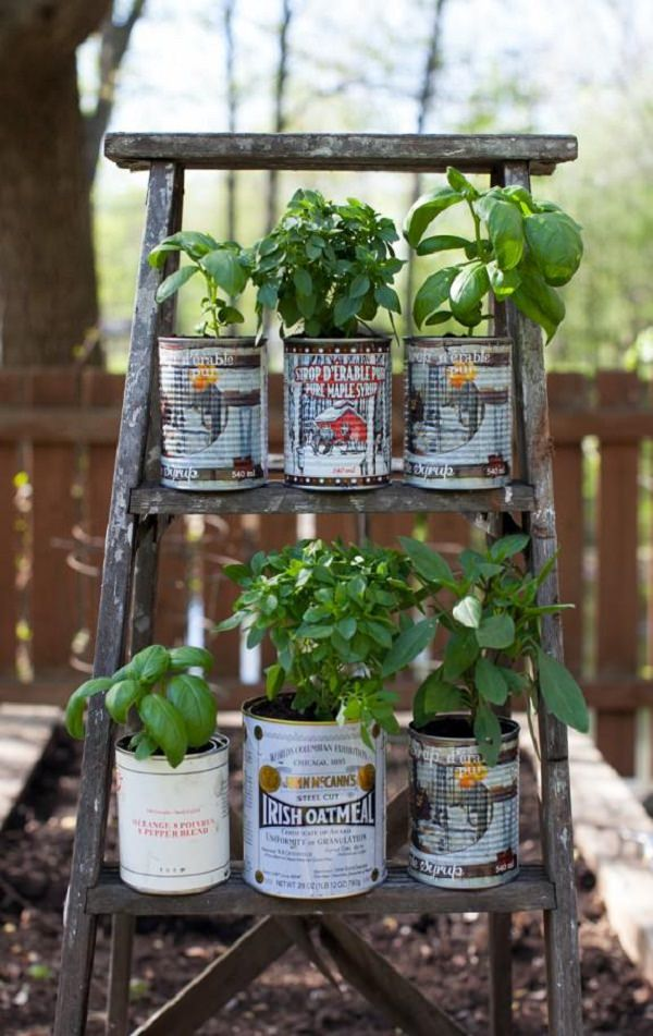 Herbs In Cans Balcony Herb Garden 6 Mini