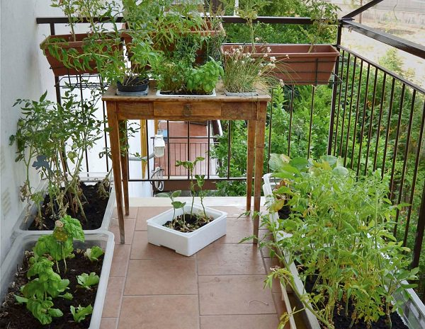 balcony herb garden (7)_mini
