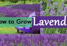 Planting White Clover | How to Grow White Clover