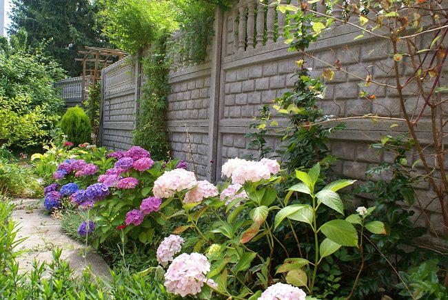 landscaping with hydrangea (13)_mini