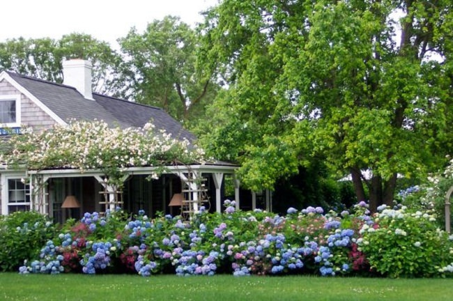 landscaping with hydrangea (15)_mini
