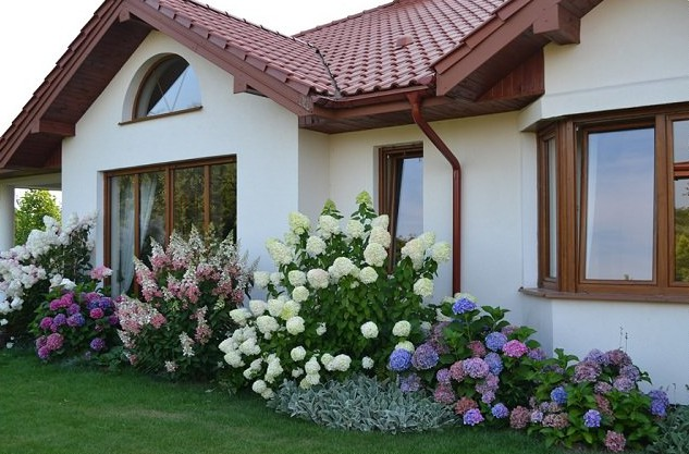 landscaping with hydrangea (2)_mini