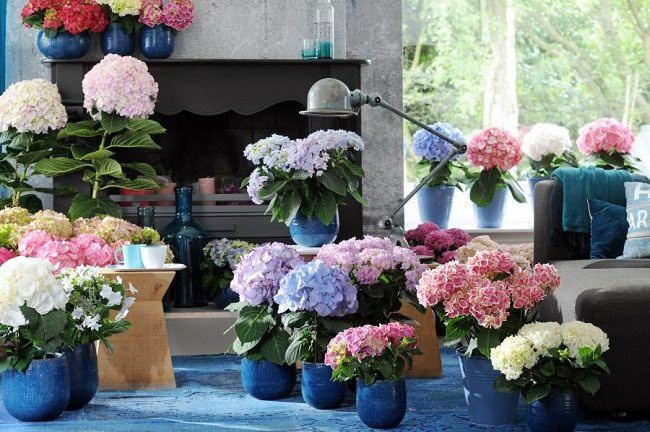 landscaping with hydrangea (8)_mini