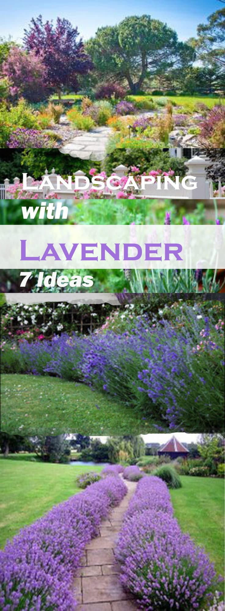 Landscaping With Lavender Is Easy And Of Low Maintenance As This Herb Available In So