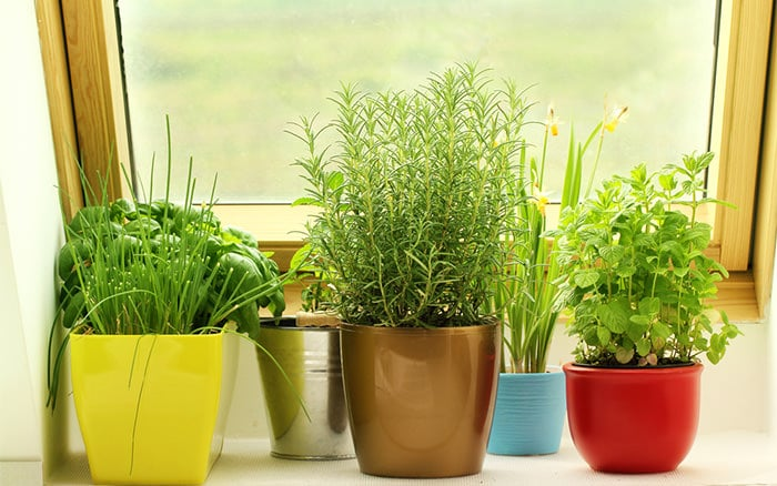 Learn How To Make A Windowsill Herb Garden If You Re Short Of E