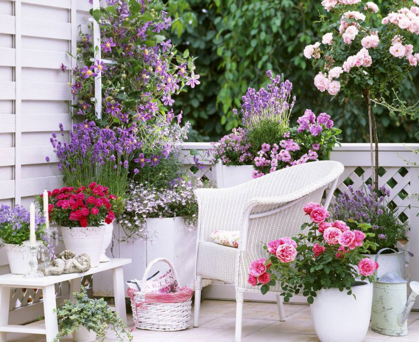 small rose garden growing roses in containers balcony patio and