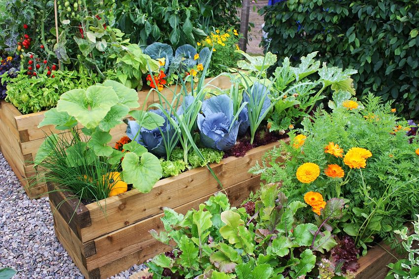 How To Make An Urban Vegetable Garden City Vegetable Garden