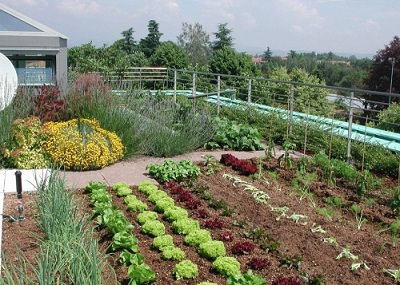 Integrate Vegetable Patch On The Terrace Terraced Garden