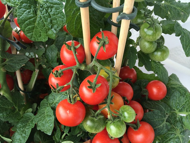 Good Natural Fertilizer For Tomatoes