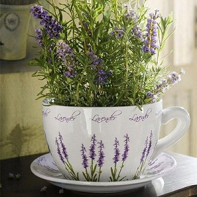levander for a tea herb garden