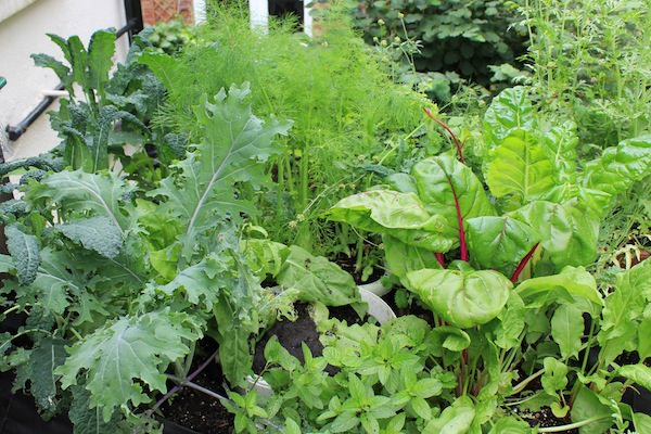 Edible Plants that Grow in Shade