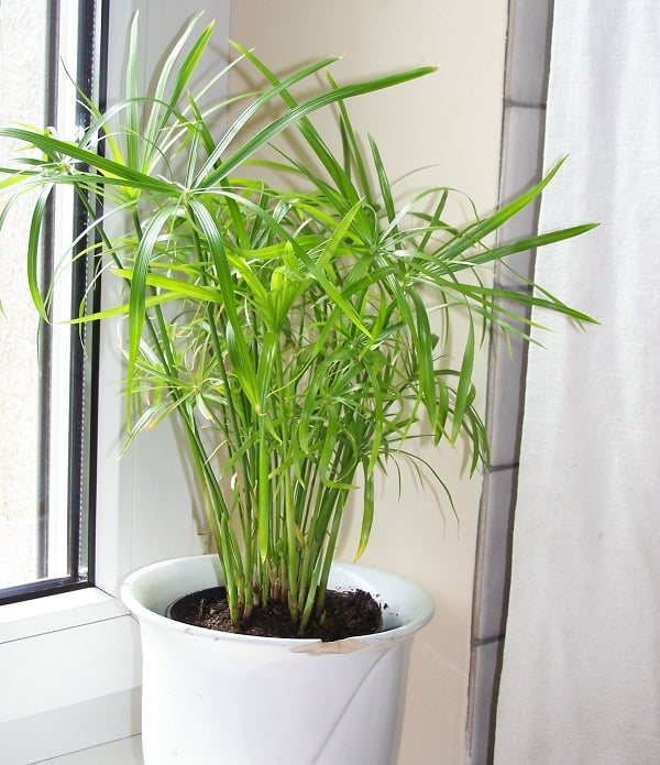 Plants that Grow without Sunlight | 17 Best Plants to Grow Indoors on house plants for stairs, house plants for bathrooms, house plants for hallways, plants for low light rooms, plants that like dark rooms, house plants for offices,