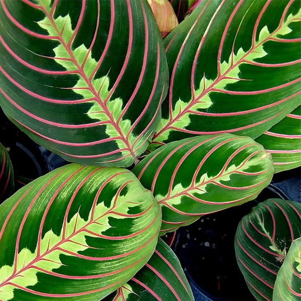 Plants That Grow Without Sunlight 26 Best Plants To Grow Indoors