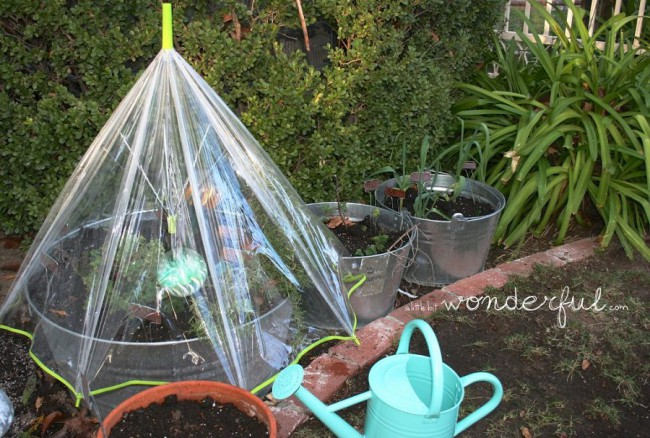Umbrella-Greenhouse_mini