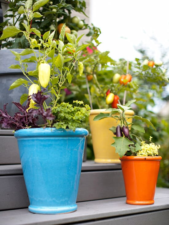 container kitchen garden vegetables