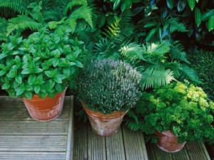 container kitchen garden herbs