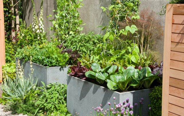 kitchen garden in pots