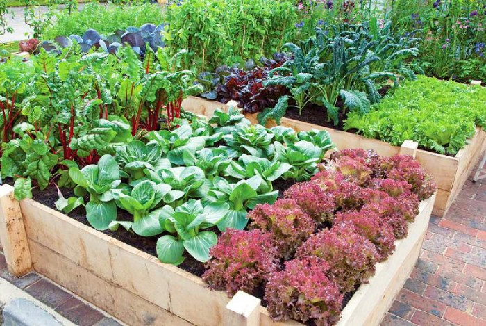 Bon ... Vegetable Gardening Tips