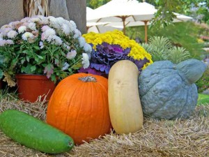 gourds-18256_1280-1024x718_mini