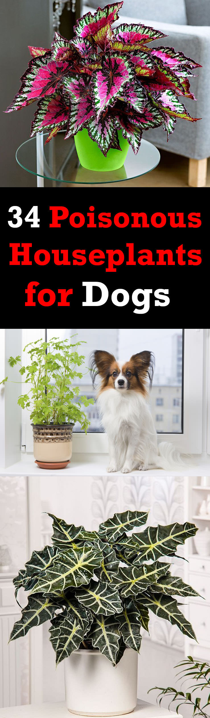 There are poisonous houseplants for dogs and cats. Some are mildly poisonous and some are fatal. It is better to know about them if you own a pet!