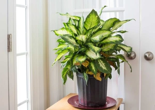 34 Poisonous Houseplants For Dogs Plants Toxic To Dogs