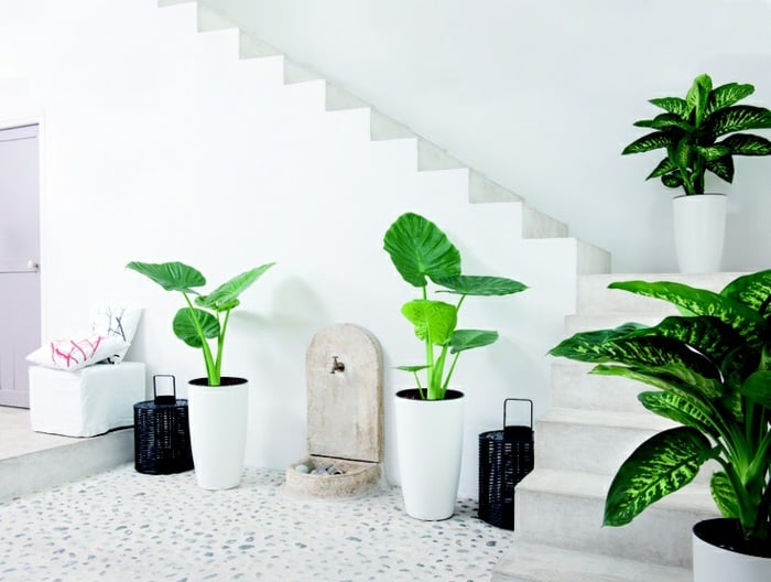 Green plants in white pots