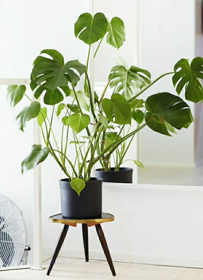 Houseplant display Ideas more (6)