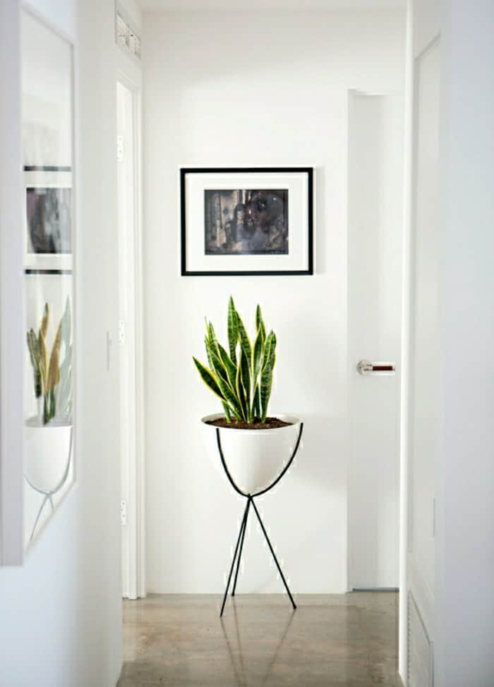 Houseplant display Ideas more (9)