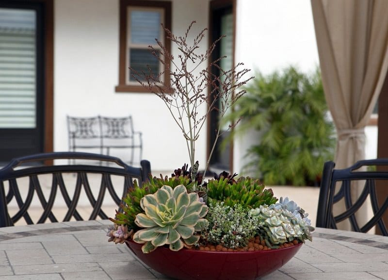 How to make Succulent Dish Garden