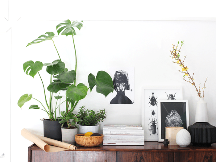 Sideboard decorate House plants also belong to