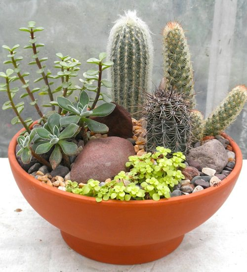 How To Make A Succulent Dish Garden