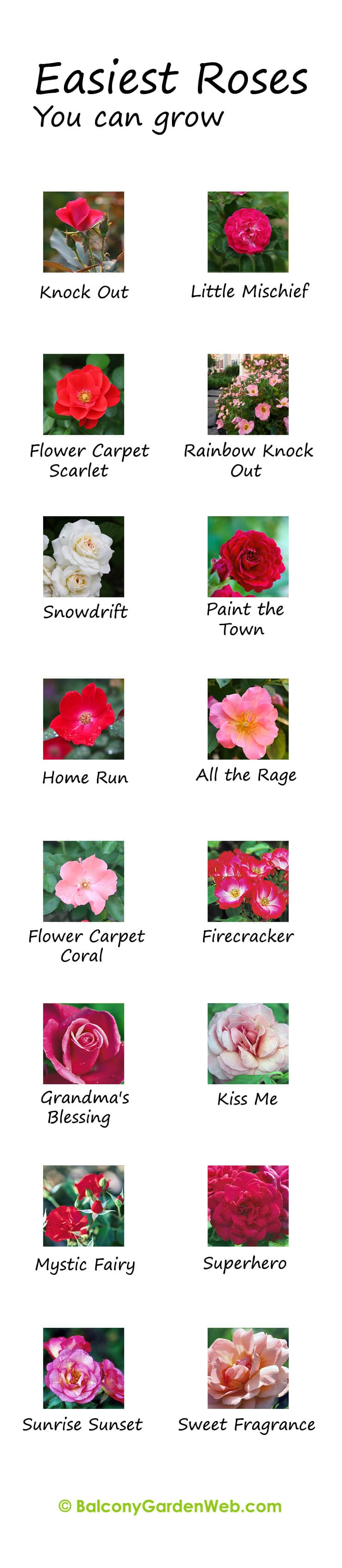 What are the easiest rose varieties? You might have known but the chart given here can be useful for you. More amazing info in this post.
