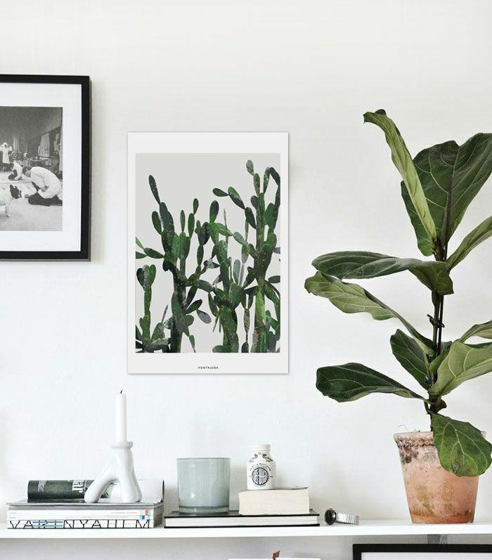 house plants home ideas (2)