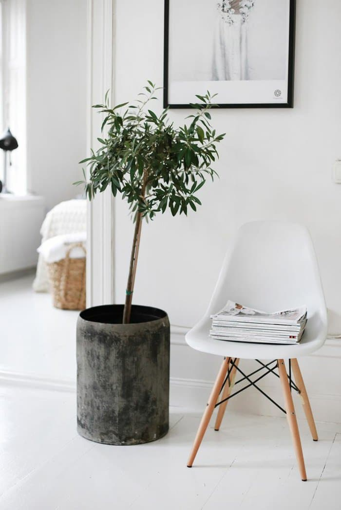 house plants home ideas (3)