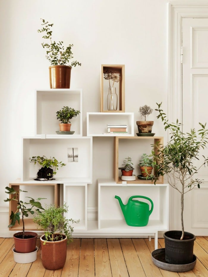 House Plants Home Ideas 4