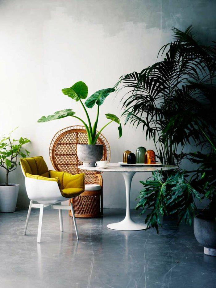 house plants home ideas (7)